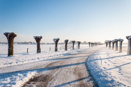 pollard: Country road between two rows of bare pollard willow trees. It is winter in the Netherlands. Stock Photo