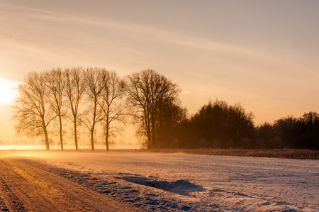 wintery day: Agricultural fields covered with a layer of snow and with bare tree silhouettes in low afternoon sunlight.