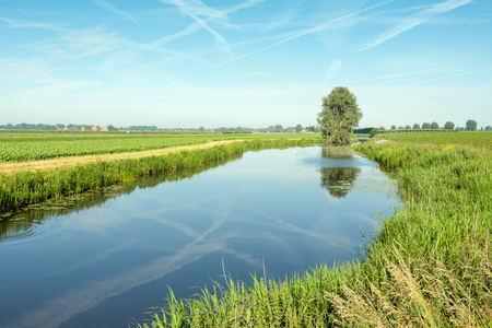 windless: Dutch landscape early in the morning on a windless sunny day in summertime. The blue sky with contrails and a solitary tree in the background are reflected in the mirror smooth water surface.