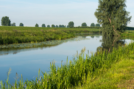 windless: Crooked willow tree reflected in the background of a small stream on a windless day in the summer season. Stock Photo