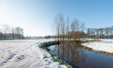 pollard willows: Small meandering river with a thin layer of ice in a Dutch winter landscape with reflected bare trees and snow on the fields.