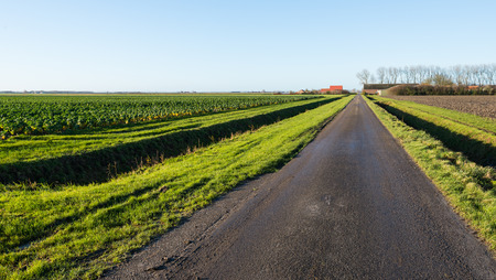 both sides: Agricultural landscape in a Dutch polder on one side with a plowed field and on the other hand, growing Brussels sprouts plants. Between the road and the fields on both sides is a narrow ditch. Stock Photo