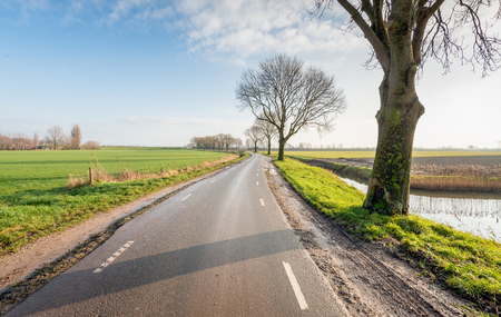 meandering: Agricultural polder landscape on a sunny day in the autumn season with a row of trees besides a meandering country road between the fields.
