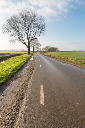 polder: Small country road in an agricultural Dutch polder landscape with some bare trees. It is a sunny day in autumn.