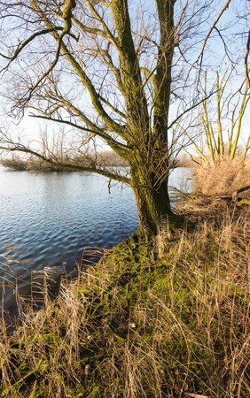 floodplain: Leafless trees in the water of a flooded floodplain of a major Dutch river on a sunny morning at the start of the winter season. Stock Photo