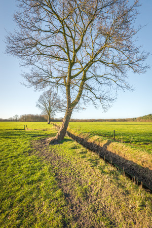 barbed wire fences: Lone trees in pastures. Between the fields is a ditch and around the pastures are fences of wooden posts with barbed wire.