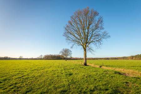 barbed wire fences: Bare trees in large pastures. Between the fields is a ditch and around the pastures are fences of wooden posts with barbed wire.