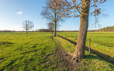 barbed wire fences: Bare trees in pastures. Between the fields is a ditch and around the pastures are fences of wooden posts with barbed wire.