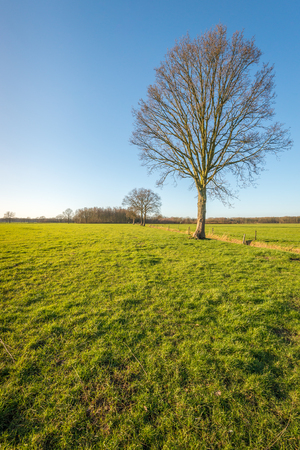 bare wire: Bare trees in large pastures. Between the fields is a ditch and around the pastures are fences of wooden posts with barbed wire.