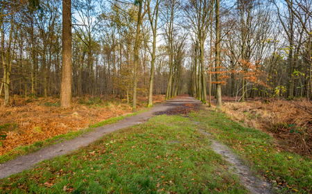 largely: Paths between the largely bare trees in the autumn forest. Many orange and brown leaves have already fallen on the floor of the forest. Stock Photo