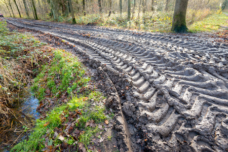 dirt path: An autumn forest with large tire prints with a deep tread marks on a curved dirt path in the woods.