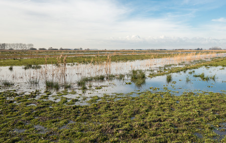 swampy: Swampy nature reserve with reeds and grass partly flooded due to the heavy rainfall in the winter season. Stock Photo