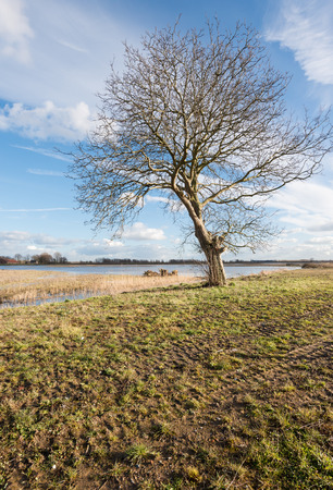 marshy: Characteristic solitary tree with bare branches growing in a marshy area.