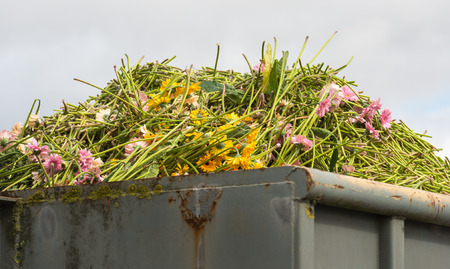 garden waste: Closeup of a heap of disapproved gerbera flowers in a gray steel waste container. Stock Photo