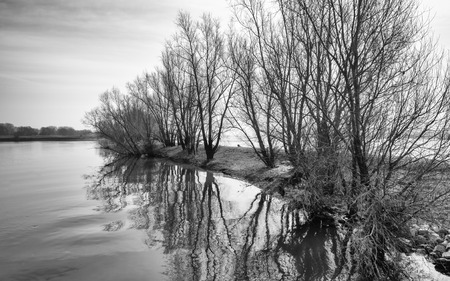 wide  wet: Monochrome image of bare bushes on a groyne on a Dutch river.