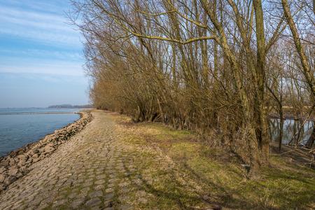 groyne: Bare bushes on a groyne in a Dutch river.