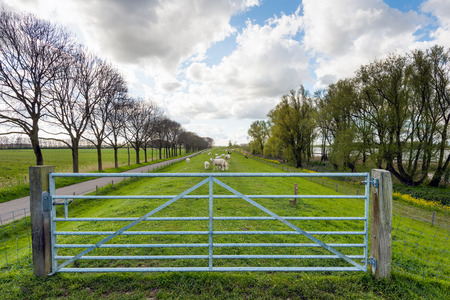 seemingly: Backlit image of a closed galvanized steel gate between two wooden poles in front of a seemingly endless embankment with grazing sheep and lambs. It is a cloudy day in the beginning of springtime.