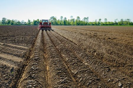 coupled: Farmer seed potatoes in a Dutch field of clay soil with the aid of a tractor coupled to the 4-row combi-planting machine which at the same time also forms the ridges.