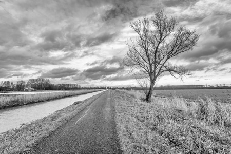 Monochrome image with a great perspective of a lone bare tree a narrow path along a canal. It's a cloudy day in the autumn season. Stock Photo - 57480889