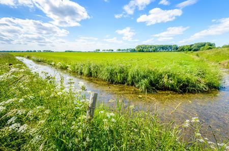 Bloeiende gras en wilde planten, zoals koe peterselie op de rand van een sloot in een landelijk gebied met een grote weide. Aan de rand van de sloot is een houten paal met prikkeldraad.