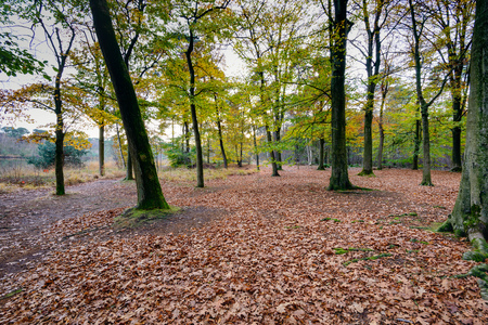 brassy: An oak forest with a crooked tree and a bottom covered with lots of brassy fallen leaves