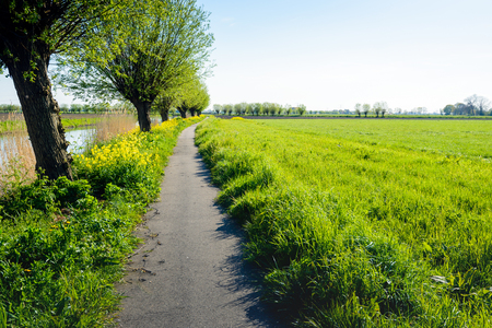 pollard: Backlit image of a narrow bicycle path along a small river. Its a sunny day in the spring season, the trees are budding and the yellow rapeseed flowers in abundance.