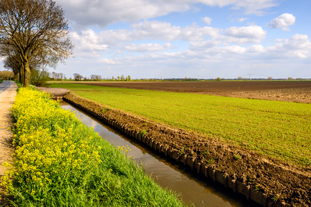 revetment: Rural Dutch landscape in springtime with a ditch with newly fitted wooden revetment.