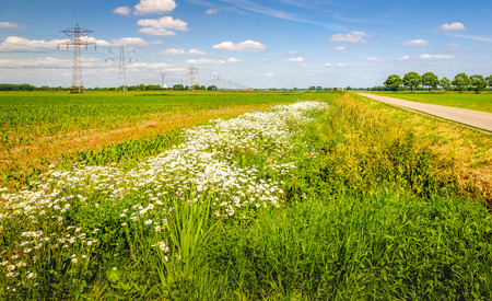 agricultural area: Colorful image of an agricultural area in the Netherlands with a row of pylons in the field. At the fields edge are exuberant flowering wild plants. Its a sunny day with a blue sky in the summer season. Stock Photo