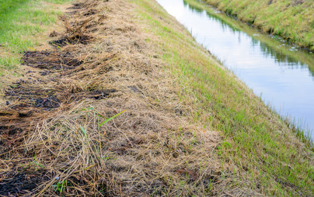 cleaned: The waterway is cleaned in a Dutch polder and the sides are cut to maximize drainage. The grass clippings and plant residues are on the edge.