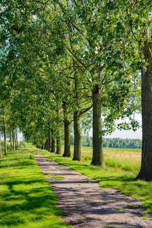suelo arenoso: camino de arena idílica cubierto de hierba a la sombra entre los árboles a ambos lados. La pequeña carretera ha sido cerrado y ya no se utiliza. Foto de archivo