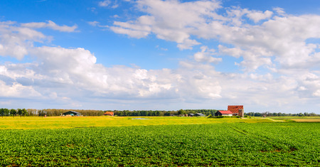 Colorful landscape on a sunny day in the summer. In the foreground is a field of sugar beet plants. On the dike on the background are new farms and outbuildings.