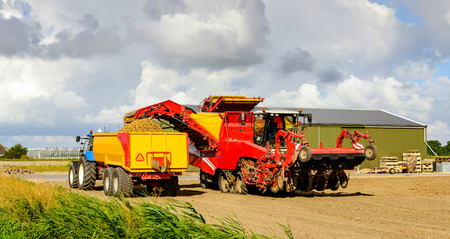 coupled: Red colored self-propelled potato harvester loads grubbed potatoes in a yellow tipping trailer coupled with a blue tractor in a Dutch potato field in the summer season.