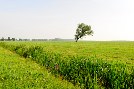 lopsided: Lonely crooked tree in a large flat area of grassland. In the foreground a ditch divides the area diagonally.
