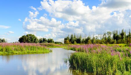 Nature in the Netherlands with many flowering wild plants and a beautiful cloudy sky reflected in the mirror-smooth water of a small lake. It is a bright sunny day in the middle of the summer season.