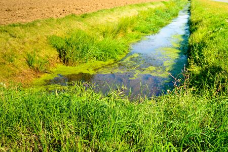 polder: Polder ditch in summertime. On the water surface is duckweed and on the banks reeds and grass is growing. Stock Photo