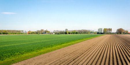 planted: Lines of soil after seeding potatoes in the Netherlands. It is a sunny day in springtime now.