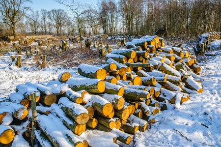 heap of snow: Winter forest in the Netherlands with a heap of felled trunks in the foreground. The sun is shining and a layer of snow covers the landscape. Stock Photo