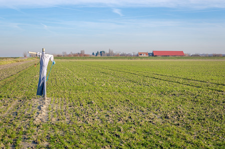 Recently seeded field in a polder in the Netherlands with a simple scarecrow to discourage the birds. It is a sunny day in the middle of the winter season.