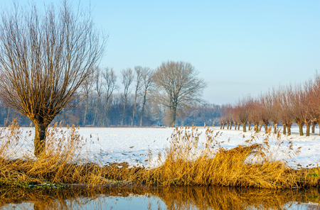 Wintry landscape with a snowy field, a row of bare willow trees and yellowed reeds reflected in the mirror smooth water surface of a small stream. Stock Photo
