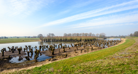 Colorful landscape with pruned old and irregularly shaped willow trees reflected in the mirror-smooth surface of a flooded nature reserve next to an embankment in the Netherlands. It is a sunny day at the end of the winter season. Stock Photo