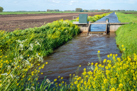 weir: Small weir in a stream for water level control in a Dutch polder. Its spring with young and fresh grass and yellow flowering rapeseed. Stock Photo