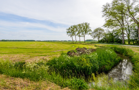 polder: Polder landscape in the Netherlands in springtime with trees reflecting in the mirror smooth water surface of a curved small stream.