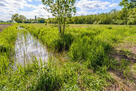 polder: Backlit image of a small stream with reed plants in a Dutch polder landscape on a sunny day in the spring season. Stock Photo