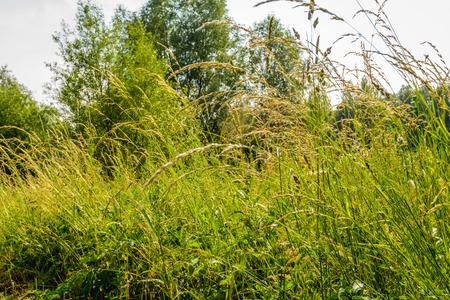 Nahaufnahme der blühenden Gräser von einem niedrigen Winkel gesehen. Es ist Hochsommer jetzt. Lizenzfreie Bilder