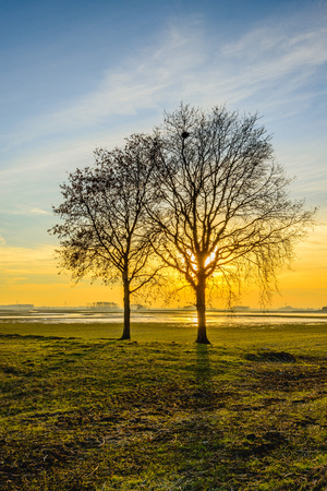 Backlit image of two bare trees with whimsically shaped branches in a wide Dutch nature reserve. The sun sets right behind of one tree. It is in the end of the fall season.