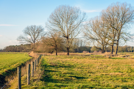 Wooden poles and barbed wire from a long fence in a rural  landscape in the Netherlands at the end of a sunny day in the beginning of the winter season.