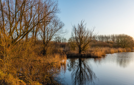 windless: Banks of a creek in a Dutch nature reserve in the late afternoon of a sun ny and almost windless day in the winter season. Stock Photo