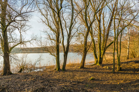 Backlit image of a lake seen through the trees and branches at the bank. The low sun creates long shadowds. It is in the late afternoon of a sunny day in the Dutch winter season. Stock Photo