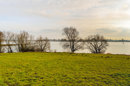 Bare tree silhouettes  at the bank of a wide Dutch river at the end of an afternoon in the winter season.