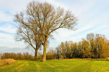 Two trees of different species and length are entwined in each other. It is a sunny day in the Dutch winter season. Stock Photo